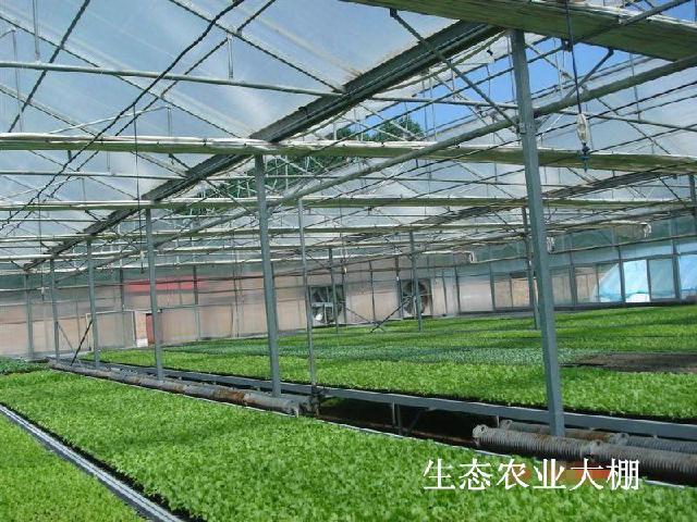 专业阳光板 专业温室,青岛舜诚阳光板