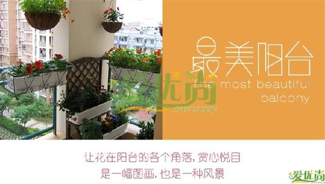 上海家庭室内绿化阳台园艺绿色植物公司