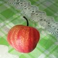 早酥紅梨梨苗專業種植模式指導