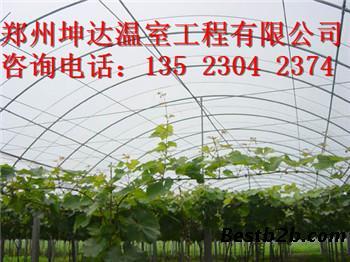 阳泉草莓大棚搭建造价葡萄大棚建设设计
