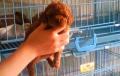云南红河州景洪本地狗场常年繁殖出售泰迪犬泰迪熊贵宾犬