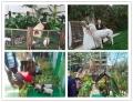 人氣萌寵動物展百鳥展承接各種演出活動