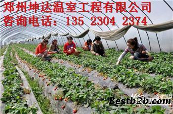 廊坊果蔬大棚建设成本 草莓大棚建设价格 葡萄大棚建设价格