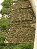 青蛙養殖網40目30目物好價低食臺網工廠批發熱賣