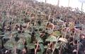 湖北鑫希望生態農業金線蓮種植得到市場的認可
