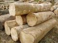 木材進口清關操作流程及注意事項