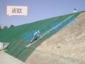 邊坡固定HDPE三維植被網 護坡綠化減少沖蝕EM4