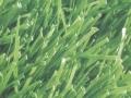 安徽宿州人造草坪足球草休閑草運動草