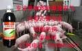 專注養豬廠除臭,哪個廠家的除臭劑質優價廉