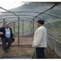 養蜂紗網胡峰虎頭蜂專用網工廠熱賣可做網罩結實耐用