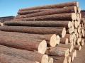 非洲原木材進口報關代理公司