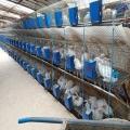 供蘭州養兔基地與甘肅肉兔養殖加盟養殖加盟批發