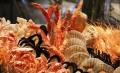 美國 南美海鮮,水產品進口報關手續流程