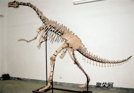 恐龙是卵生动物,而恐龙蛋化石就是恐龙的卵经由了长时间的地壳演变所