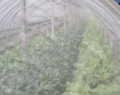 豆蟲養殖紗網加厚抗老化超結實工廠直銷
