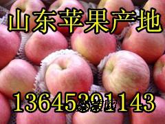 山东冷库红富士苹果大量批发今日价格