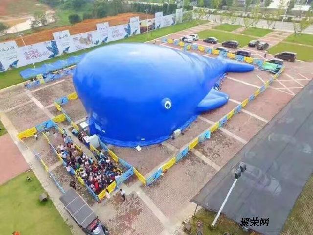 海洋球主题乐园活动方案鲸鱼岛设备租赁安装价钱
