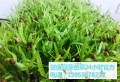 益康園芽苗菜種植技術老師介紹葵花苗含有的營養價值