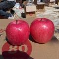 柱狀蘋果樹苗、一年柱狀蘋果樹苗報價、柱狀蘋果樹苗報價