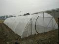 加厚養殖紗網螞蚱大棚網結實特好用