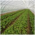 蔬菜防蟲網加厚加密防病蟲工廠現貨直發規格齊全
