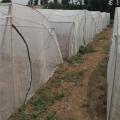 臨沂廠家專業生產蝗蟲養殖紗網定做拱形網罩無死角