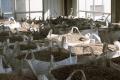 黃島生物質顆粒生產廠