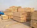 南陽出售建筑方木批發市場