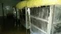 圣洁青蛙品牌豆芽生产专用食品级消毒剂