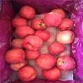 品種蘋果樹苗、品種蘋果樹苗行情