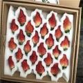 京桃香草莓苗批发价格��京桃香草莓苗出售基地