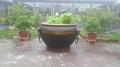 獅子頭水缸 紫銅太平缸 青銅廣場花盆