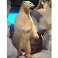 展覽模型仿真北極熊標本