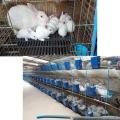 供甘肅張掖肉兔養殖加盟和酒泉種兔批發廠
