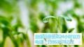 益康園芽苗菜種植技術老師介紹雙子葉和單子葉的區別