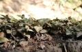 湖北鑫希望生態農業金線蓮種植為合作戶提供扶持