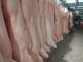 生豬的屠宰和各種豬肉的加工銷售