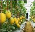 蔬菜防蟲網40目60目超厚果樹防蟲網工廠批發定制
