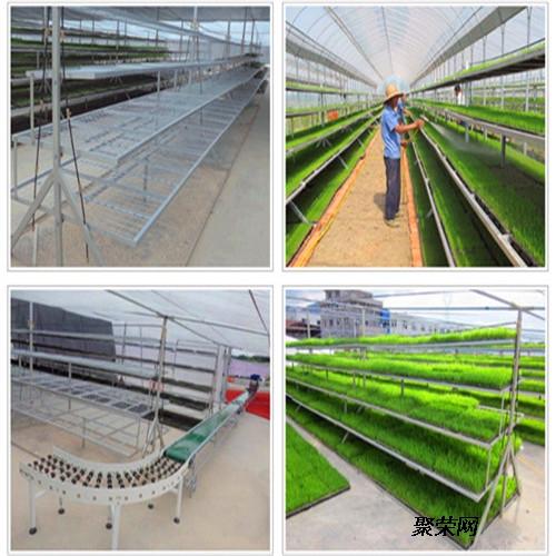 昆明花卉種植苗床網 移動苗床出售