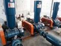 現貨供應濟南潤廳福牌污水處理設備三葉羅茨鼓風機