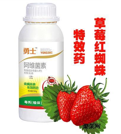 草莓红蜘蛛怎么治草莓如何不生红蜘蛛草莓螨虫红蜘蛛药