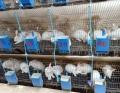 供蘭州肉兔和甘肅兔肉廠