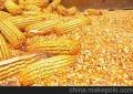 采購大量玉米、大豆