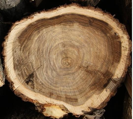 提供交趾黄檀的进口木材报关案例