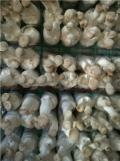 出菇房蘑菇网片食用菌培养架食用菌叠放培养架