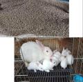 供甘肅種兔和蘭州兔子飼料