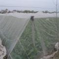 供應結實密度好防蟲網60目通風耐曬