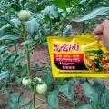 花生用昆侖風葉面肥提高坐果率