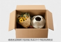 供應搬家打包紙箱五層搬家紙箱子上海市區紙箱氣泡膜出售