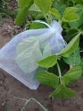 供應豆蟲養殖紗網白色60目豆蟲養殖網